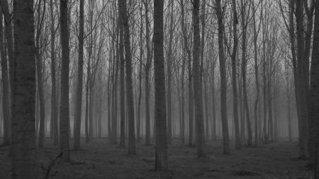Creepy Woods
