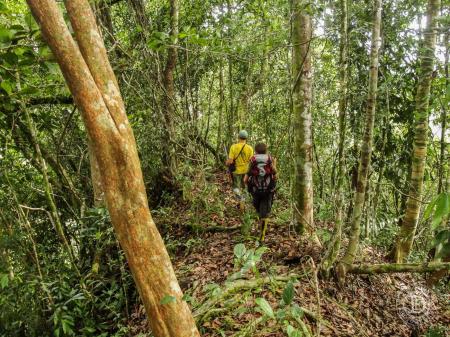 Cutting Jungles