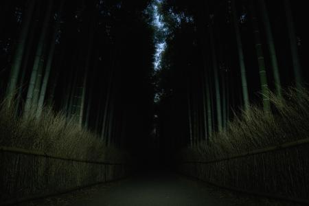 Darkness in the Bamboo Forest