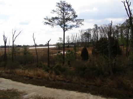 DE - Protected Wetlands