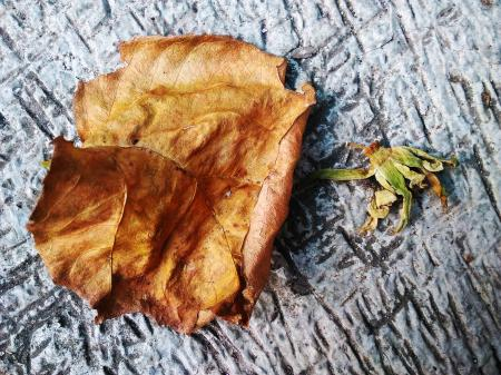 Dead Leaf and Flower
