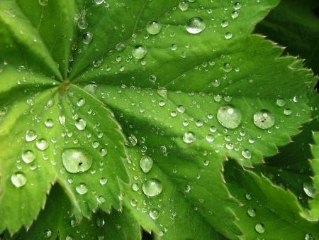 Dew on Plants