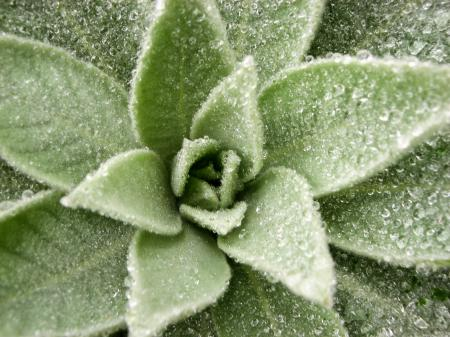 Dew on Lovely Plant