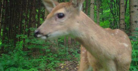 Doe A Deer A Female Deer