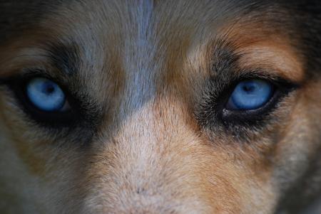 Up Close Dog
