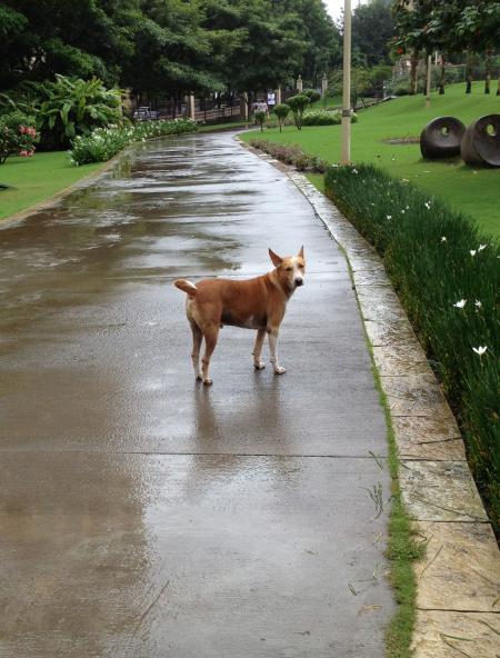Dog in street