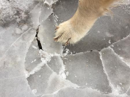 Dog paw on ice