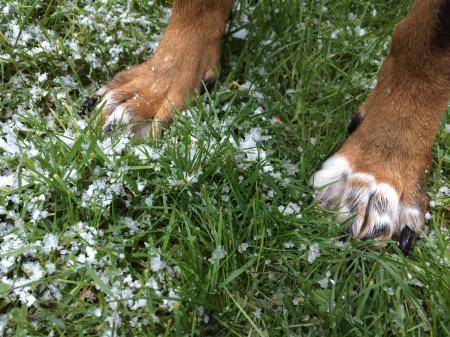 Dog paws on snowy grass