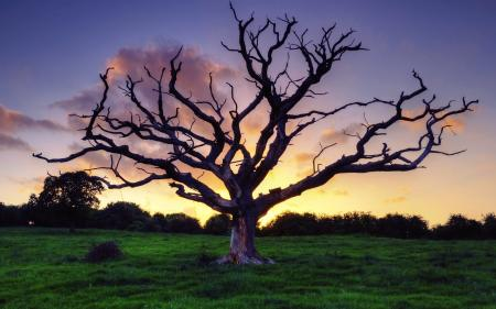 Dry old tree