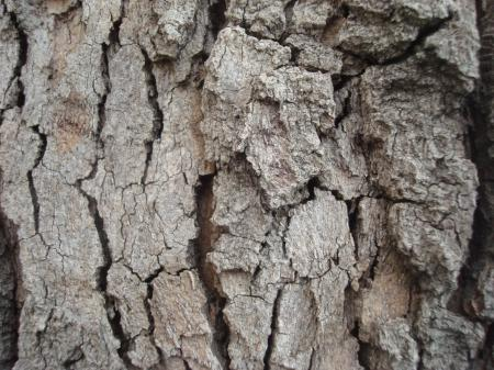 Dry wood texture