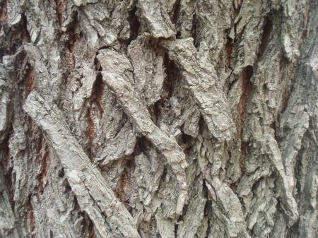 Dry wood texture