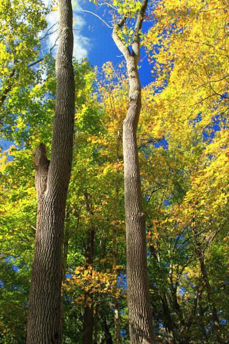 Early Autumn (4)