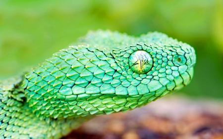 Earth Snake macro