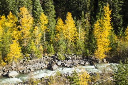 East Fork Hood River in Fall, Oregon