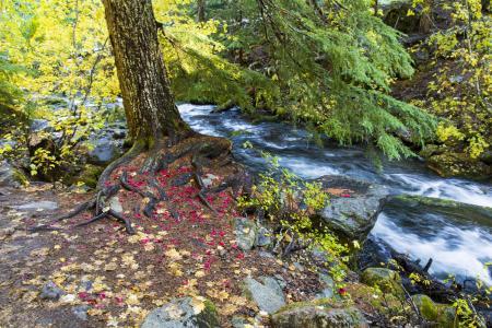 East Fork Hood River, Oregon