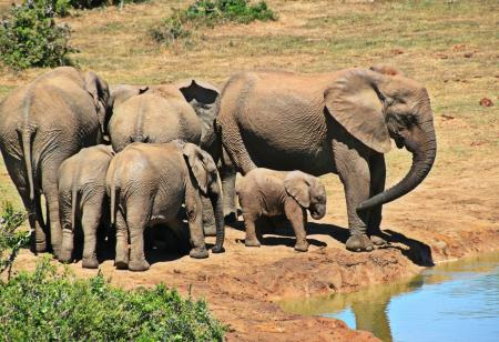 Elphants Standing on Brown Soil