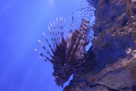 Exotic fish in the sea