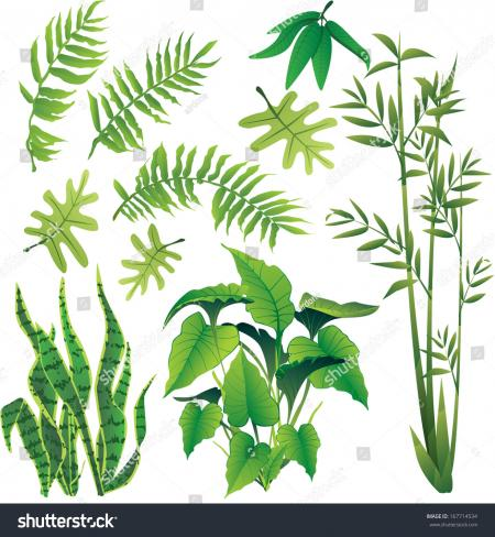 Exotic plant leaves