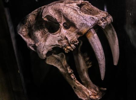 Extinct Animal Skull
