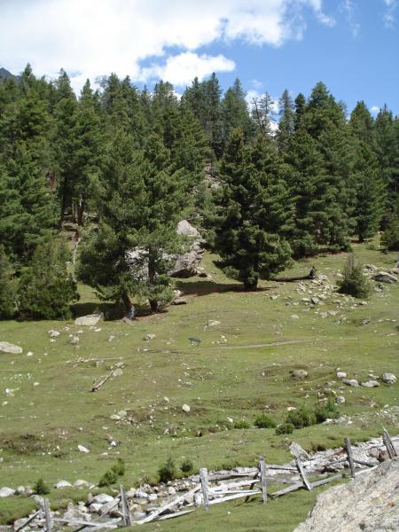 Fairy meadows, nanga parbat