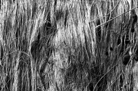 Fallen Straws Texture