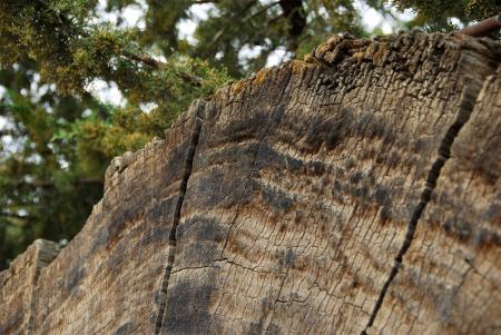 Fallen Tree - Cross Section