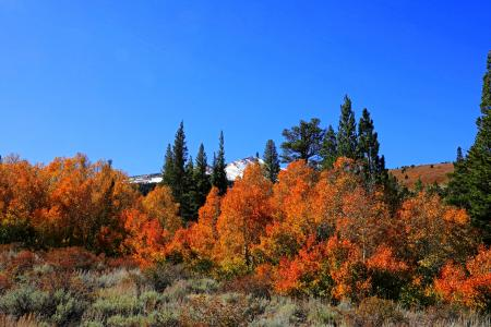 Field Surround With Orange Leaf Trees
