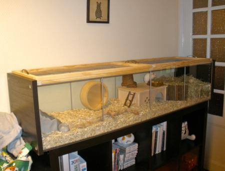 Finished hamster habitat project