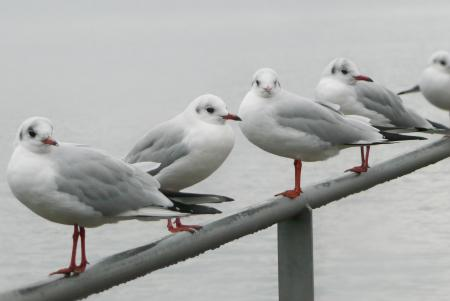Five Seagulls