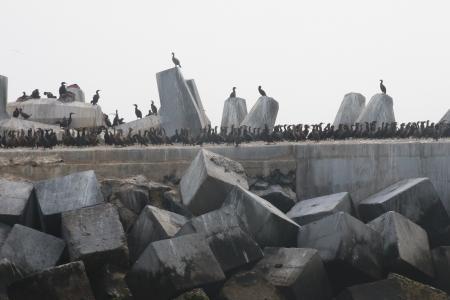 Flock of birds on concrete blocks