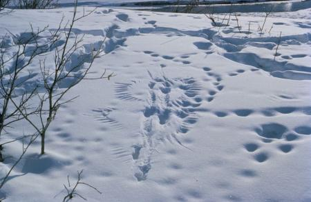 Snow with tracks