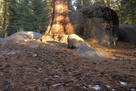 Forest Floor in Sequoia National Park