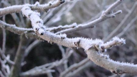Frosty Twigs