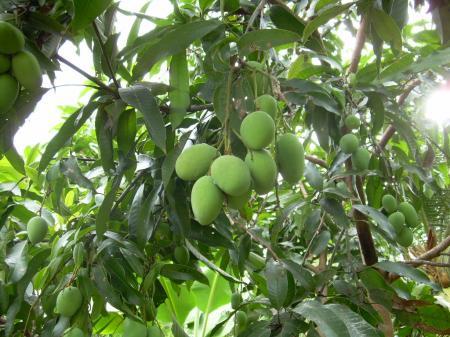 fruit and plant backyard