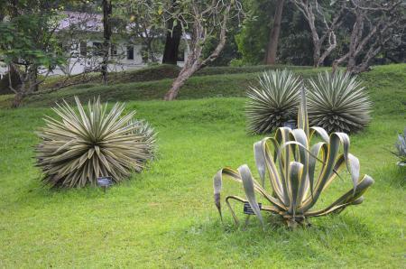Garden of Peradeniya
