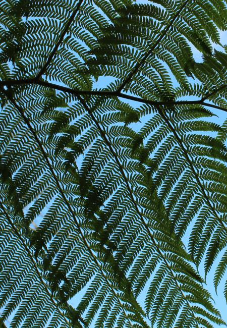Giant Fern Leaves - detail