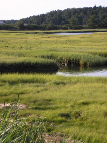 Gloucester, MA salt marsh