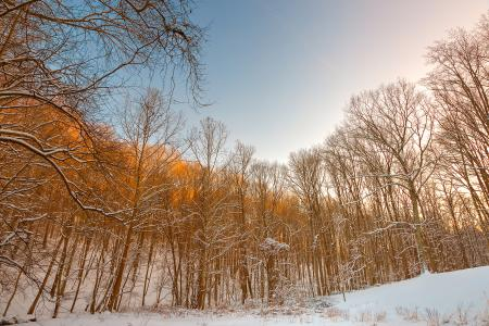 Golden Winter Forest - HDR