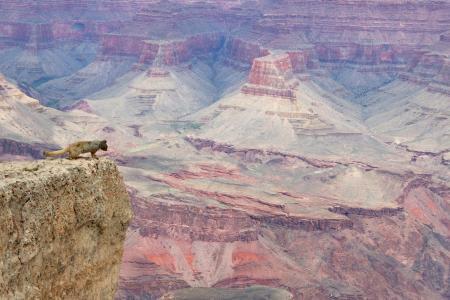 Grand Canyon Squirrel View