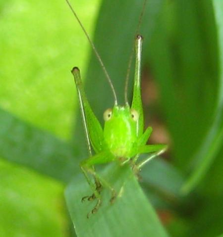 Grasshopper baby