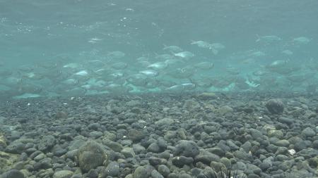 Gravel under water