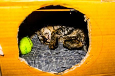 Gray and Brown Kitten in Cardboard Box
