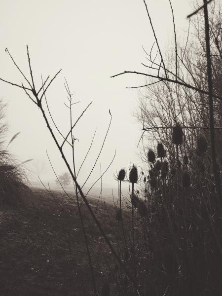Grayscale Photo of Bush Covered With Fog