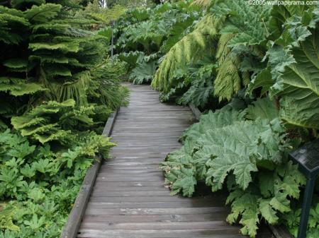 Green Garden