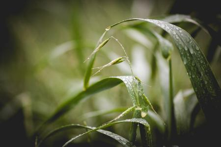 Green Grass With Water Droplets
