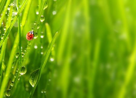 Rainy Grass