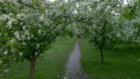 Green Springtime Blossom