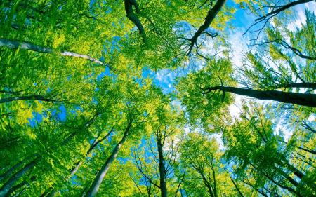 Green Tree Forest