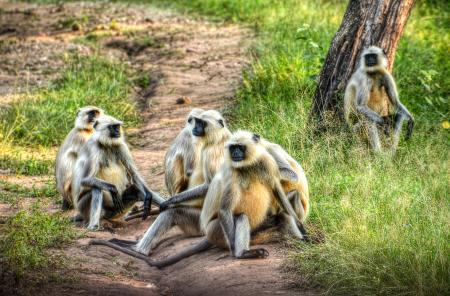 Group of Primates on Ground
