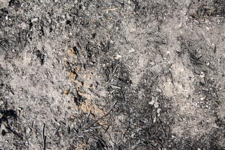 Grunge Dirt Texture